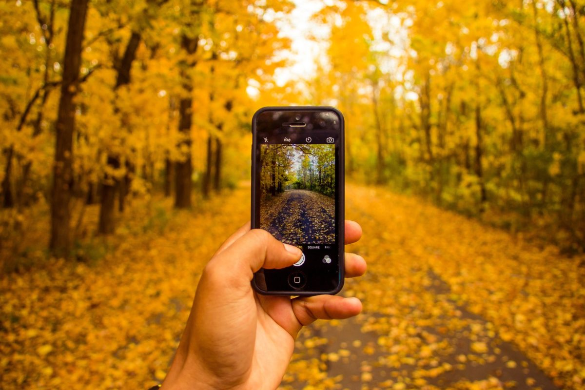 hand holding an iphone up to a forest in autumn, taking a picture